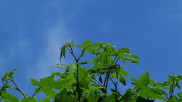 緑の葉と青空 Footage