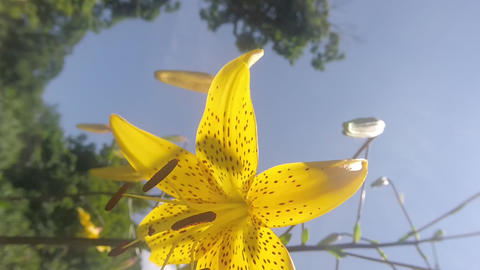 Flower closeup Stock Video Footage