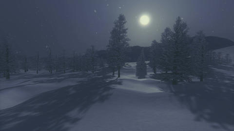 Snowbound spruce forest under full moon Footage