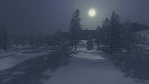 Snowbound spruce forest under full moon Footage