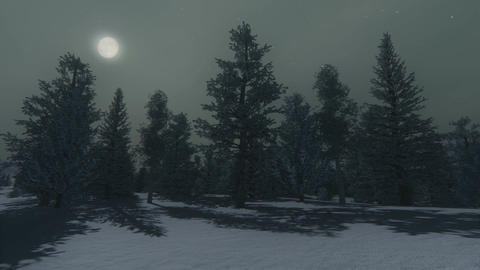 Winter pine wood at moonlight night Footage