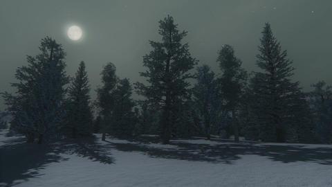 Winter pine wood at moonlight night Footage