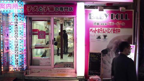 19of 23 People , street , stores , pet shop , Shibuya , Tokyo , Japan , Asia Footage