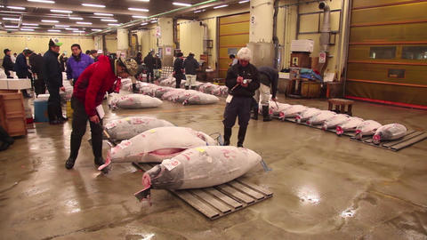 1of 23 Tuna auction , customers , Tsukiji fish market , Tokyo , Japan , Asia Footage