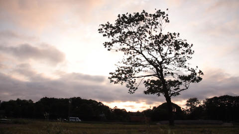 Lonely tree background Stock Video Footage