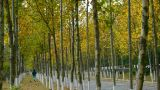 man running at long road through the woods,falling yellow leaves at autumnal park Footage