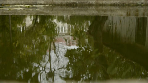 tree and house scene reflex in pond,wave on water surface Stock Video Footage