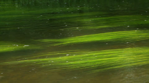 green water Stock Video Footage