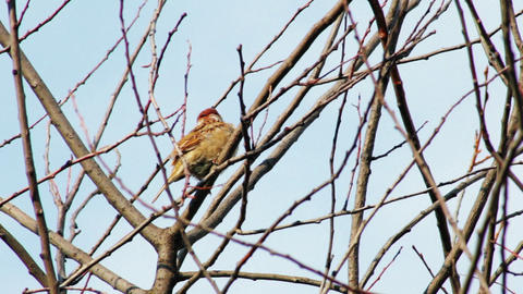 Sparrow sitting on a tree branch in summer Stock Video Footage