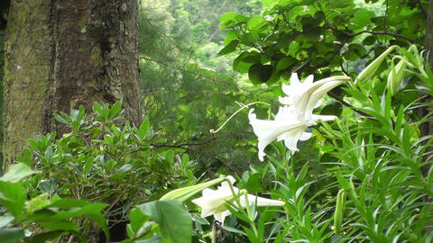 Japanese Garden 02 Stock Video Footage