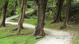 Japanese Garden 04 Footage