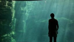 8of 10 Dolphins , animals , woman , visitor at Osaka Aquarium , Japan , Asia Footage