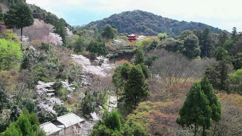 8of 10 Kiyomizu dera Park with trees , cherry blossom , Kyoto , Japan , Asia Footage