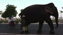 Phnom Penh Cambodia city view street elephant Footage