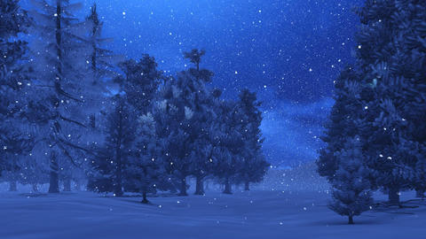 Pine Forest At Magic Winter Night stock footage