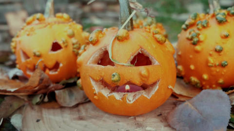 Halloween pumpkins over a tree trunk with autumn decoration Footage