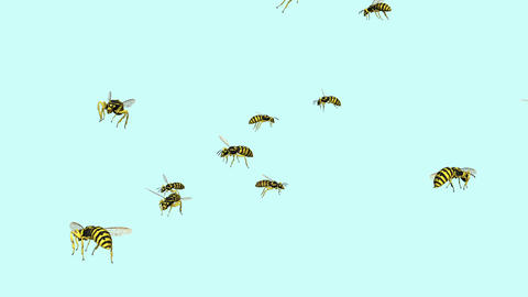 Wasp Swarm Animation stock footage