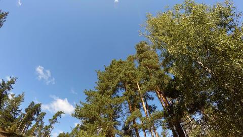 Wood against the sky. 4K Footage