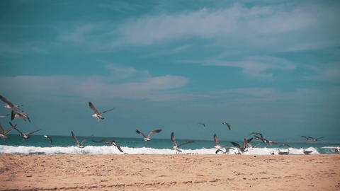 Seagulls Make Takeoff from the Ocean Beach Footage
