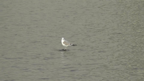 Birds On The Water stock footage