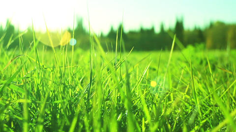 Green Grass Dolly Out stock footage