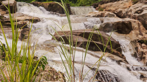 view of stream falls against rocks through plant stalks in park Footage