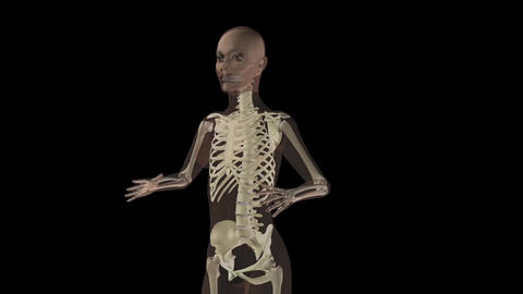 Female Skeleton stock footage