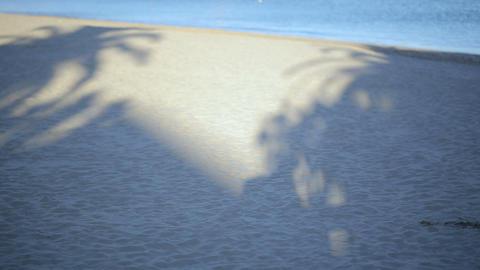 Beautiful sea landscape. Calm sea, a white sandy beach and coconut tree shadows  Footage