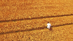 Aerial view of scientist walking through fields Footage