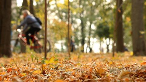 Autumn Leaf Fall stock footage