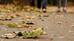 Walk In Autumn Park stock footage