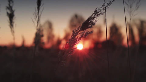 Morning sunrise from nature plants Footage