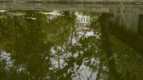 Leaves floating on the water,Trees and house reflected in pool,rippled,like a mi Footage