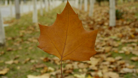 A leaf in the woods,shaking in the wind,Forest as background Stock Video Footage