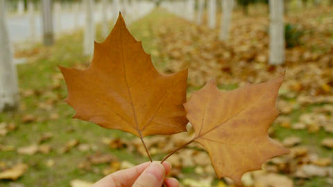 two leafs in hand,shaking in the wind,Forest as background Stock Video Footage