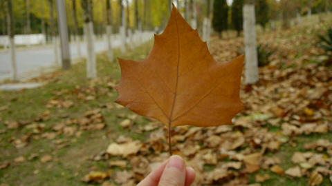 a leaf in hand,shaking in the wind,Forest as background Stock Video Footage