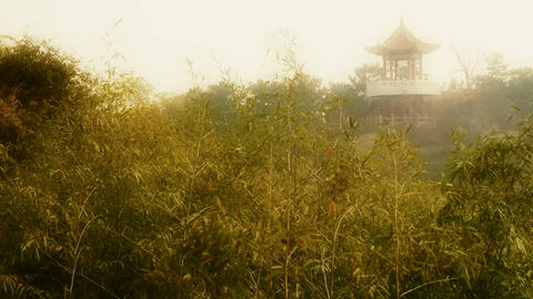 wind shaking bamboo,Pavilion on hill in distance,Hazy Style Stock Video Footage