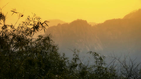 wind shaking bamboo,Mountains,hill,quiet atmosphere in sunshine Footage