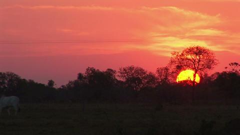 Brazil: sunset near Amazon river Stock Video Footage