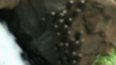 Brazil: Iquazu Falls, Devil's Throat 5 Stock Video Footage
