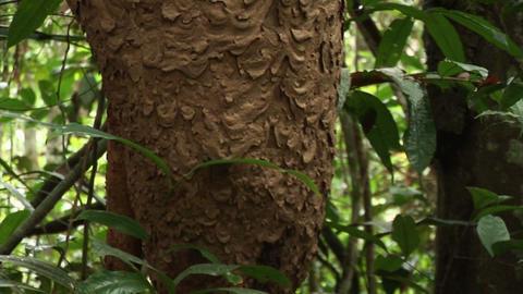 Brazil: Amazon flora 2 Stock Video Footage