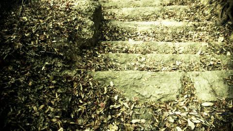 many leaf on trails,quiet and desolate Stock Video Footage