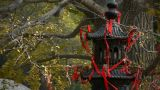 Incense burner and ginkgo tree in wind,monuments,antiques,culture Footage