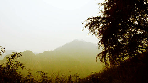 wind shaking Ginkgo tree and bamboo,Mountains,hill Stock Video Footage