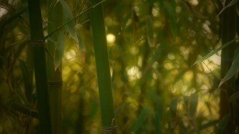 wind shaking bamboo,quiet atmosphere in sunshine,Hazy style Stock Video Footage
