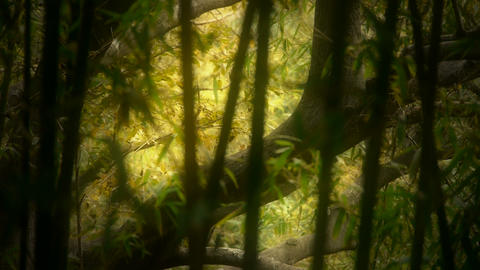 wind shaking bamboo,Trunk,branches,quiet atmosphere in... Stock Video Footage