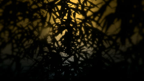 wind shaking bamboo silhouette,Hazy style,quiet... Stock Video Footage