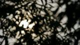 wind shaking bamboo silhouette,sunrise,sunset,sunshine,Hazy style Footage