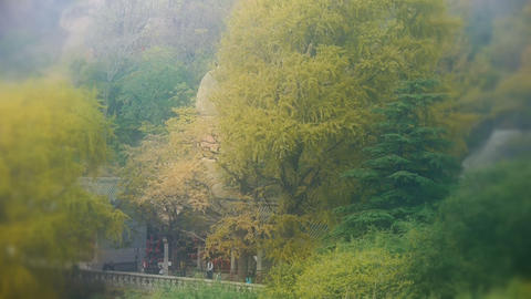 wind shaking Ginkgo tree,temple and bamboo,Mountains,hill Stock Video Footage