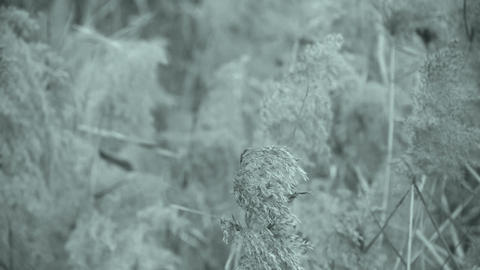 river reeds in wind,shaking wilderness,Black and white style Stock Video Footage